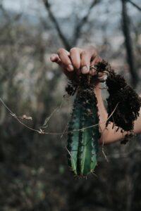 Cactus: Plant with Amazing Benefits 6