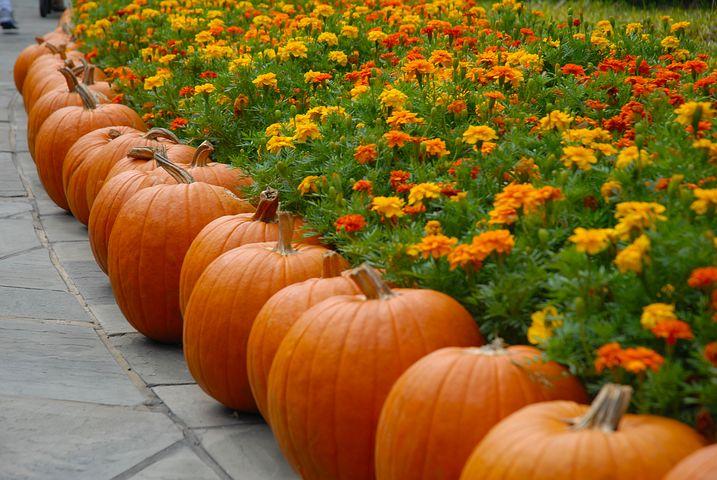 https://icytales.com/wp-content/uploads/2021/01/pumpkin-2868748__480.jpg