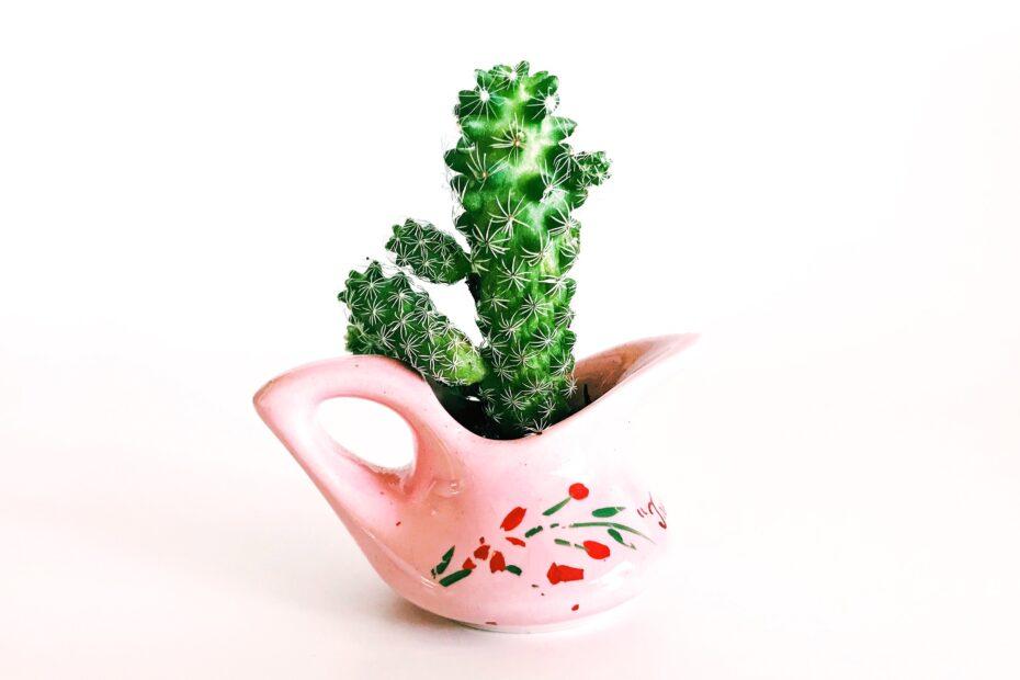 Cactus: Plant with Amazing Benefits 9