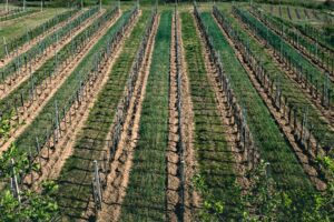 Door County Wine Trail