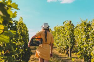 Top 10 Sonoma Wineries You Should Know 15