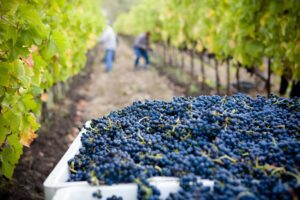 Top 10 Sonoma Wineries You Should Know 9