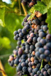 Top 10 Sonoma Wineries You Should Know 2
