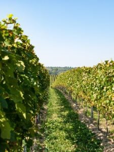 Top 10 Sonoma Wineries You Should Know 4