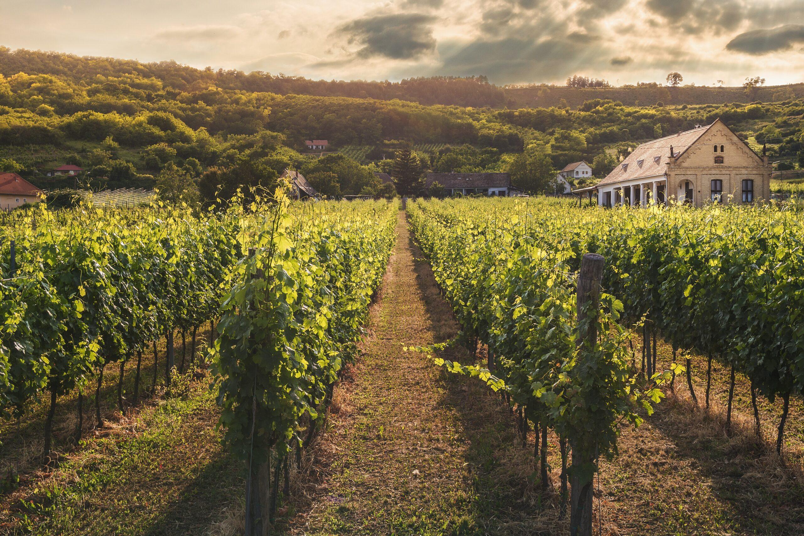 amador county wineries