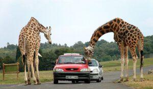 Top 6 Kinds of Safaris 5