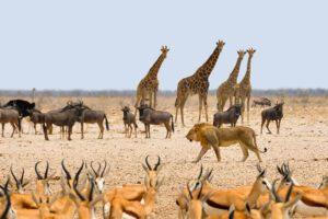 Top 6 Kinds of Safaris 2