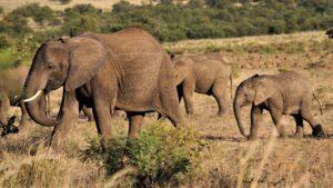 Top 6 Kinds of Safaris 9