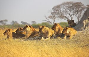 Top 6 Kinds of Safaris 10