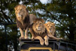 Top 6 Kinds of Safaris 7