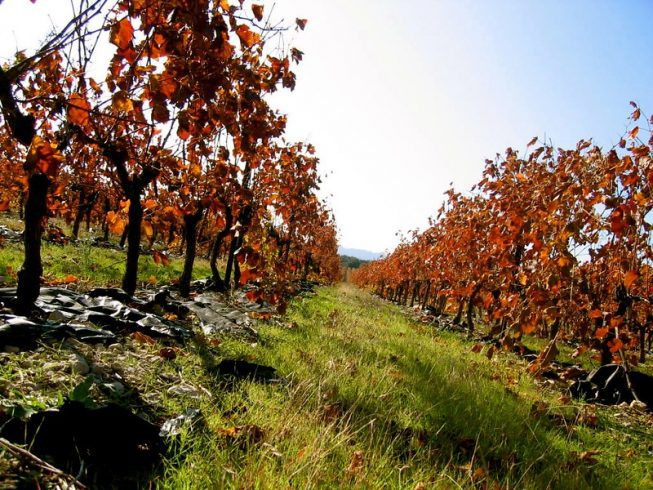 best wineries beechworth