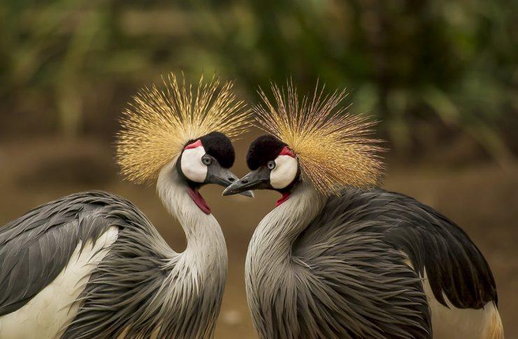 Birds of Pennsylvania